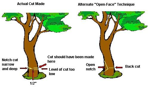 tree trunk cuts